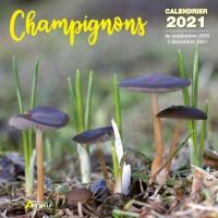 CALENDRIER CHAMPIGNONS 2021