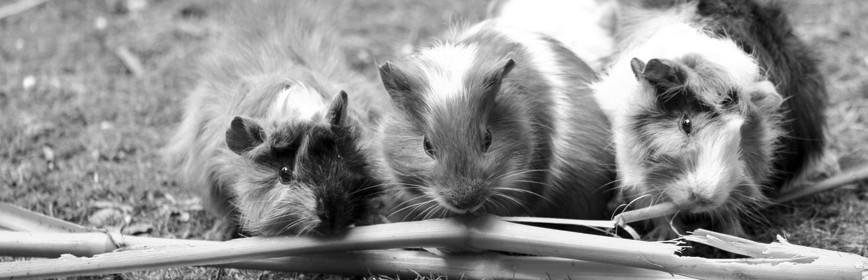 Petits mammifères - Rongeurs